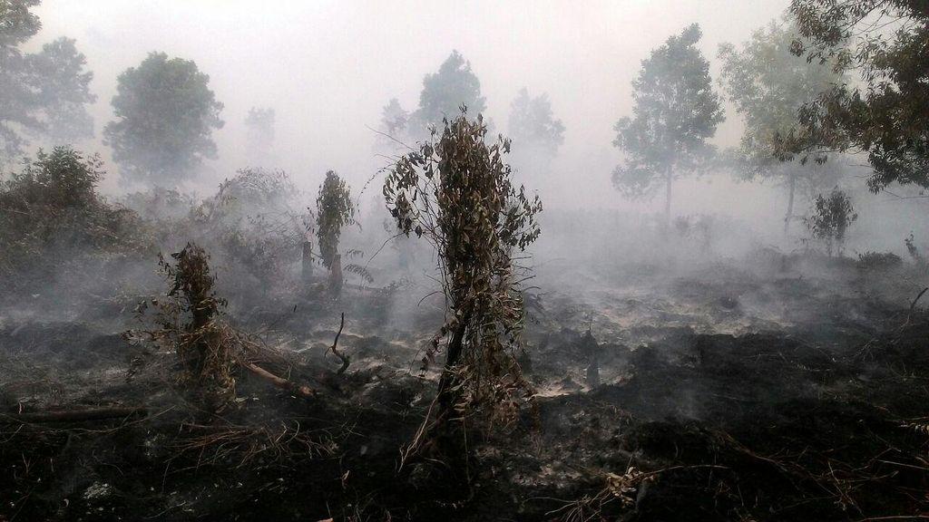 Polda Riau Digugat Terkait SP3 15 Perusahaan dalam Kasus Kebakaran Lahan