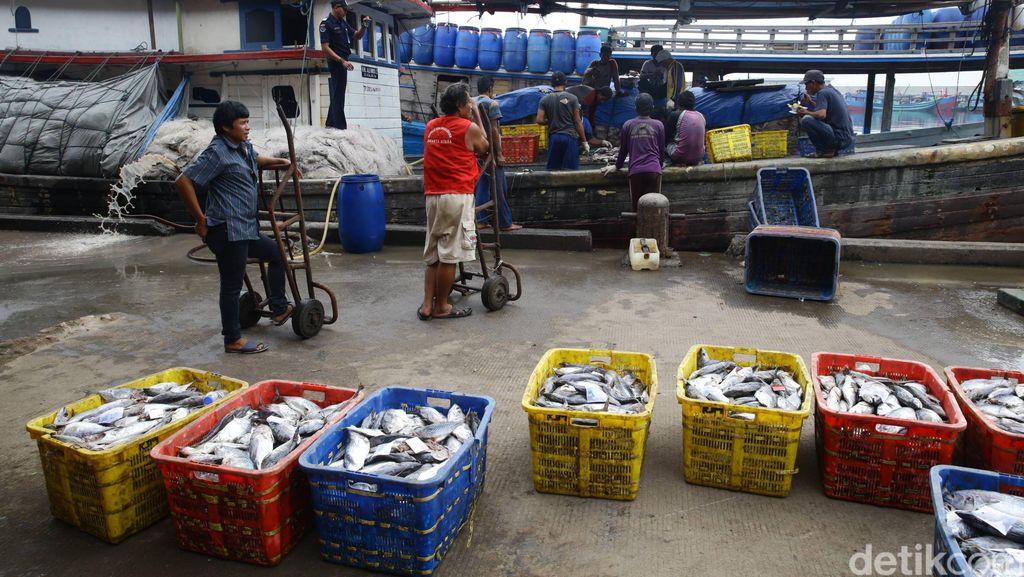 Beredar Kabar Ada Pembagian Ikan Gratis di Muara Baru Besok, Perindo: Itu Hoax