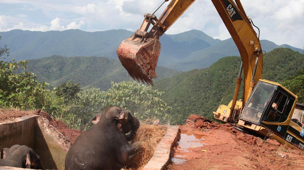 Selamatkan 3 Gajah Terjebak di Waduk China, Helikopter dan Ekskavator Dikerahkan