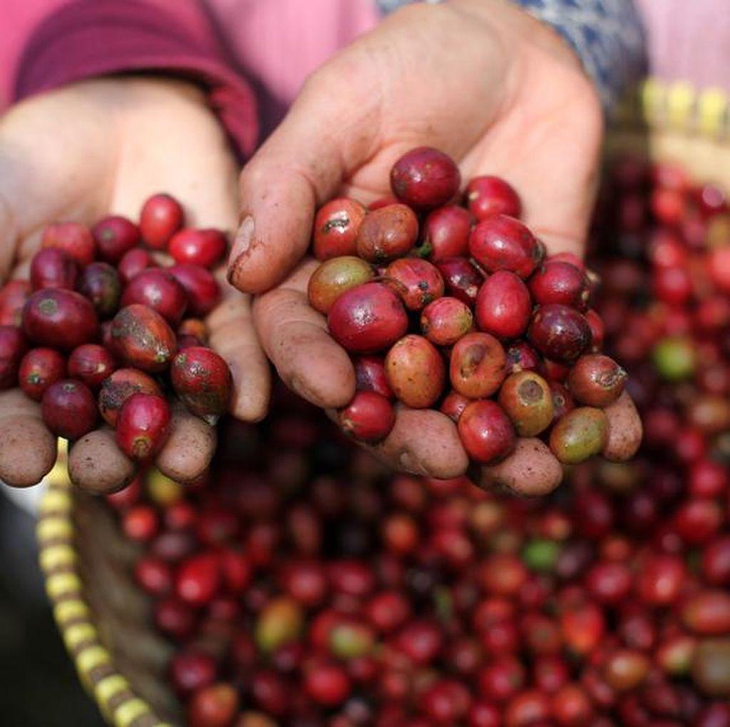 Kopi Arabika Indonesia Mulai Merambah Pasar Qatar