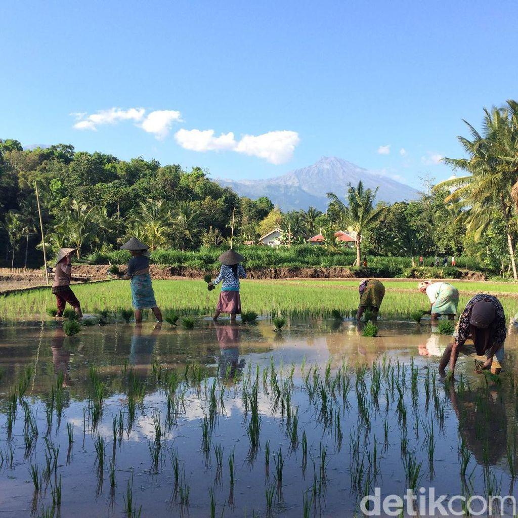 Turis di Lombok Bertambah, Warga Diajak Benahi Destinasi Tete Batu