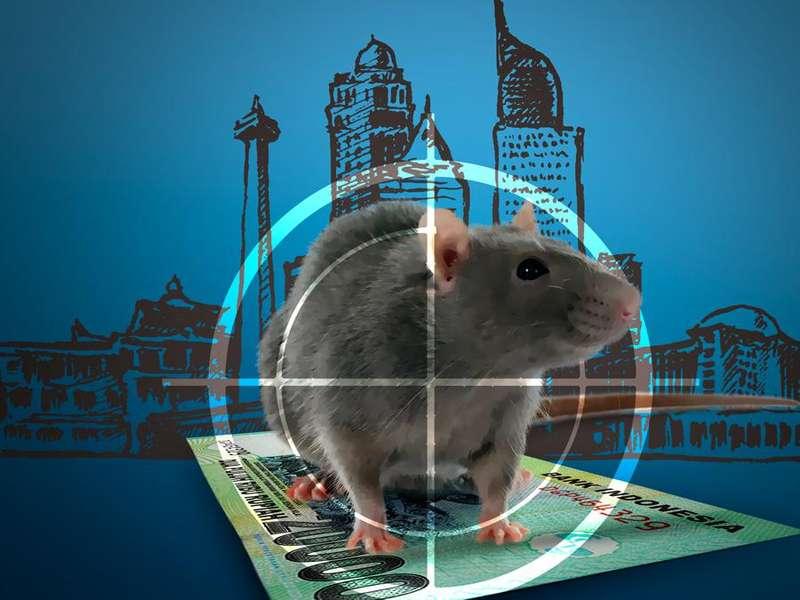 Tolak Anggarkan Perburuan Tikus di APBD, M Taufik: Masa Tikus Diburu?