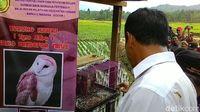 Kagetnya Mentan Amran Lihat Burung Hantu Saat Tanam Padi di Kalbar