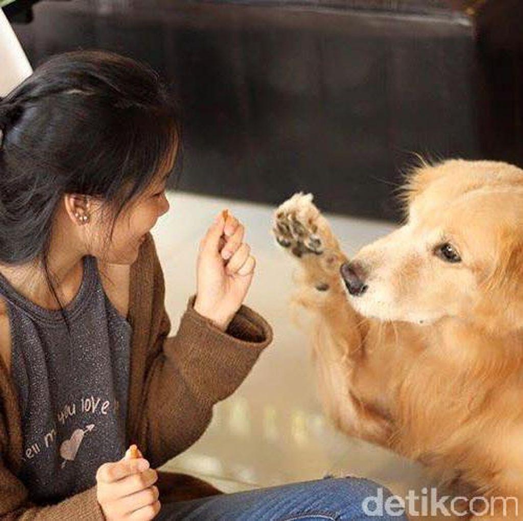 Surat Terbuka Untuk Para Pemilik Hewan Anjing