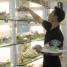 Pinot bakery berpusat di Jl. Meruya Ilir Blok B5/15A, Jakarta Barat. Jejeran roti-roti Jepang yang dibungkus dengan plastik teransparan ditaruh dalam wadah-wadah yang ada di rak. Pembeli tinggal memilih sendiri roti-roti yang dijual dengan kisaran harga Rp 6.500,00 - Rp 15.000,00 ini.