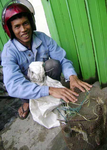 Bisnis Reptil Jalanan di Makassar