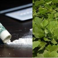 Mengobati Kecanduan Kokain dengan Ekstrak Kudzu