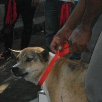 Gigitan Anjing Rabies Paling Mematikan Jika Kena Ujung Jari