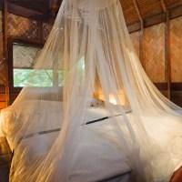 Tips untuk Rumah Bebas Nyamuk