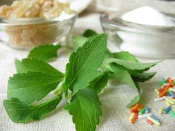 Daun Stevia, Pemanis Alami Bebas Kalori