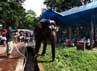 Petugas memandikan seekor gajah. Program masuk gratis Ragunan salah satu rangkaian perayaan HUT DKI Jakarta ke-485 yang sempat tertunda karena proses Pilkada DKI 2012.