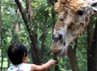 Warga Jakarta berbondong-bondong ke Ragunan untuk melihat berbagai macam binatang, salah satunya jerapah. (Ramses/detikcom).
