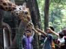 Beberapa pengunjung memberi makan jerapah. (Ramses/detikcom).