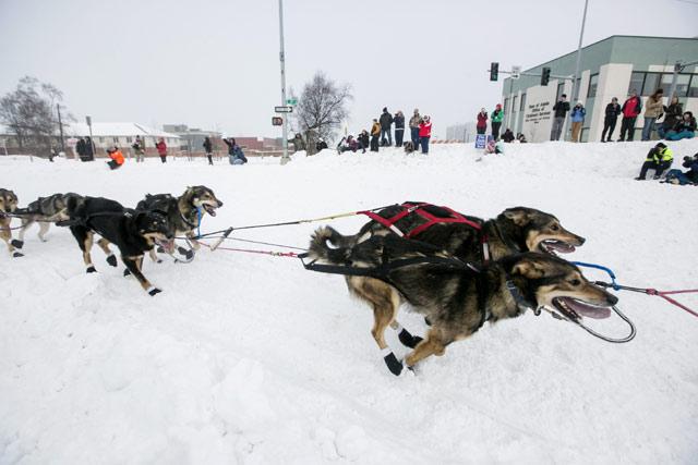 Serunya Balap Anjing di Alaska