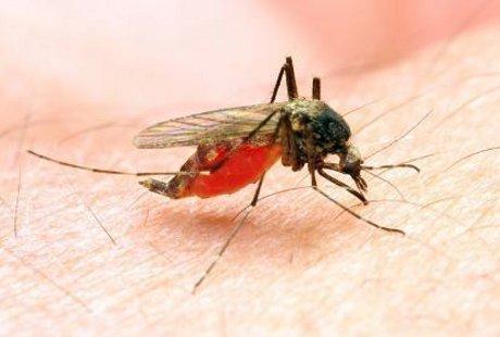 Lakukan Hal-hal Ini Agar Terhindar dari Penyakit Malaria