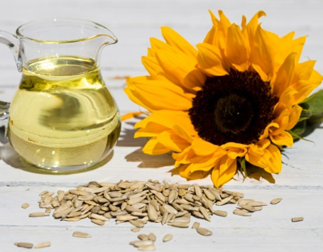 Manfaat Kuaci Biji Bunga Matahari