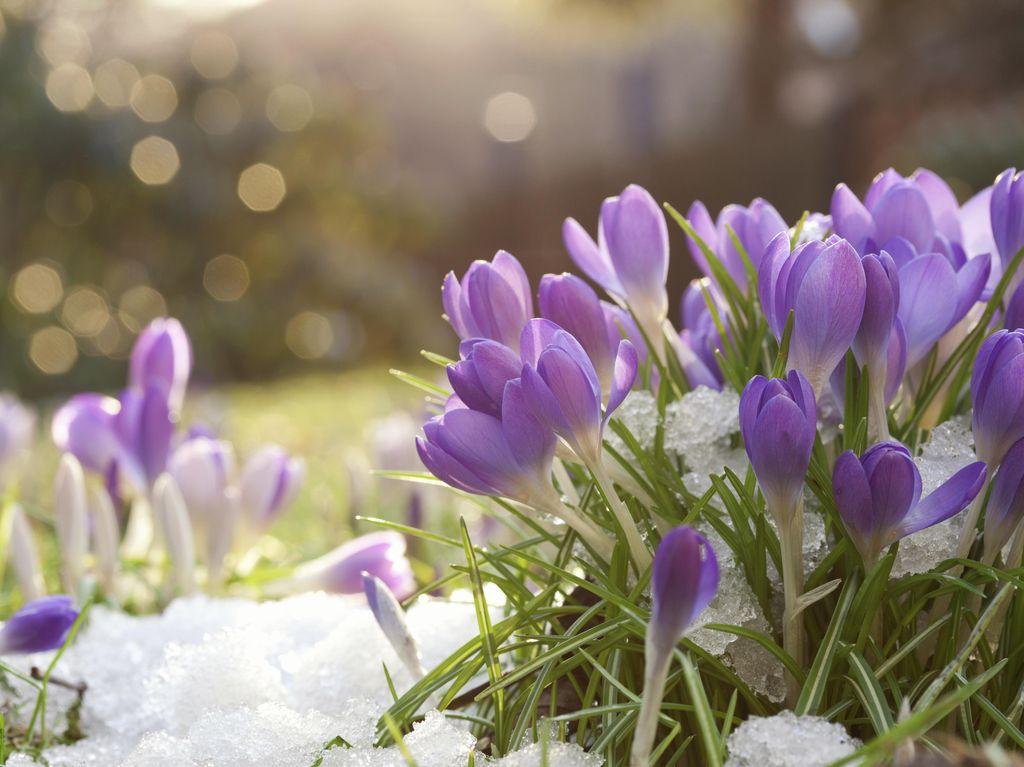 Manfaat Pemutih Pakaian untuk Perawatan Bunga Hias yang Belum Anda Tahu