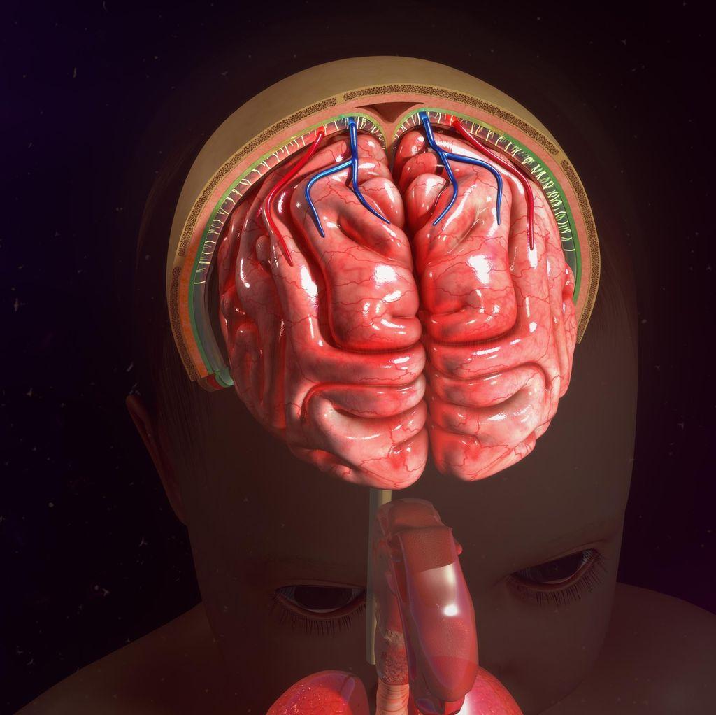 5 Fakta Unik Tentang Parasit Pengendali Otak Toksoplasma