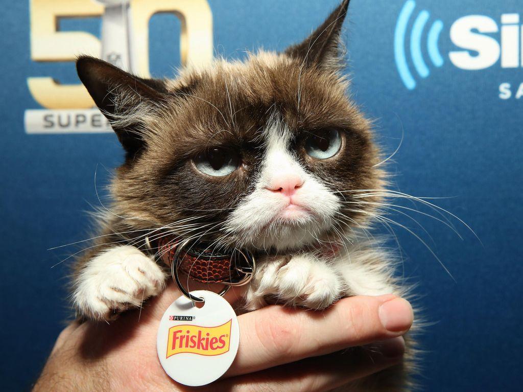 Game Si Kucing Jutek Grumpy Cat akan Segera Hadir