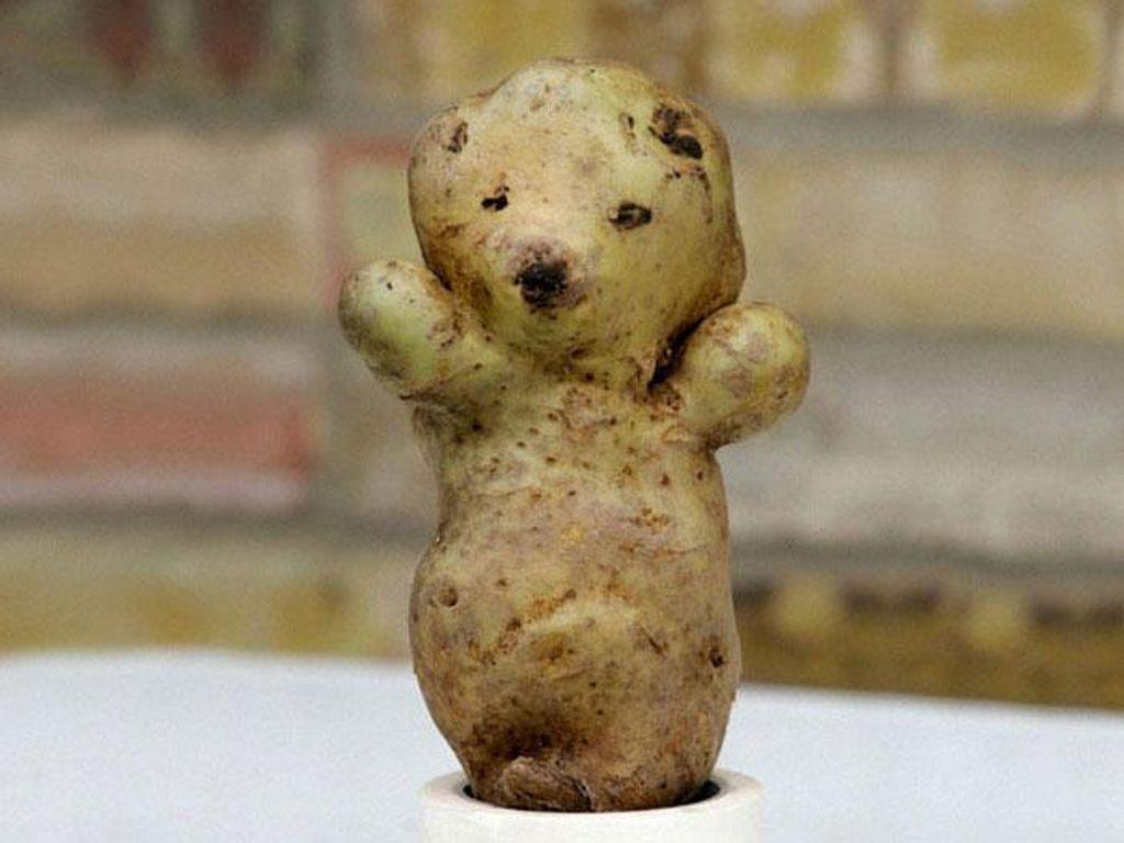 Kalau kentang ini malah mirip beruang. Lengkap dengan tangan yang terangkat.